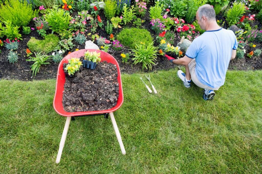 Senior man gardening beside wheelbarrow